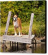 Boxer On Lake Dock Canvas Print by Stephanie McDowell