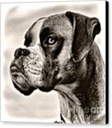 Boxer Profile Canvas Print