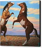 Boxing Horses Canvas Print