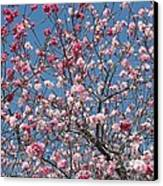 Branches And Blossoms Canvas Print