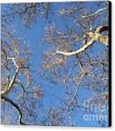 Branching Out Canvas Print by Melissa Stinson-Borg