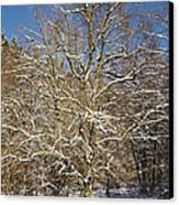 Break Under A Large Tree - Sunny Winter Day Canvas Print by Matthias Hauser