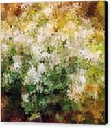 Bridal's Wreath Canvas Print by Brenda Bryant