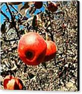 Bright Apples Canvas Print