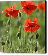 Bright Poppies 1 Canvas Print