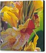 Brilliant Canna Lilies Canvas Print by Robert Bray