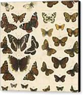 British Butterflies Canvas Print