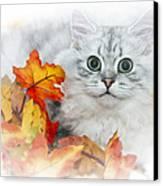 British Longhair Cat Canvas Print by Melanie Viola