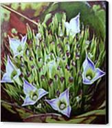 Bromeliad In Bloom Canvas Print by Urszula Dudek
