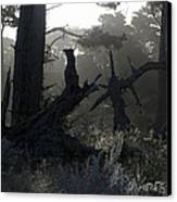 Brooding Forest Canvas Print by Elery Oxford