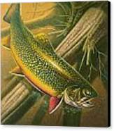 Brook Trout  Hideaway Canvas Print