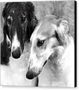 Brother And Sister Borzoi  Canvas Print by Maxine Bochnia