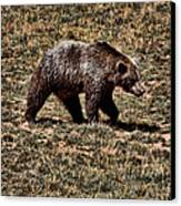 Brown Bears Canvas Print by Angel Jesus De la Fuente