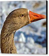 Brown Goose Canvas Print by Thomas  MacPherson Jr