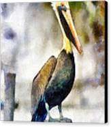 Brown Pelican Canvas Print by Lester Phipps