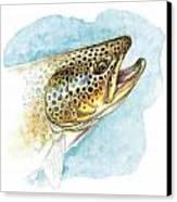 Brown Trout Study Canvas Print