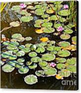 Bruges Lily Pond Canvas Print by Carol Groenen