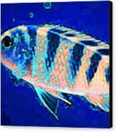 Bubbles - Fish Art By Sharon Cummings Canvas Print by Sharon Cummings