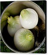Bucket Of Onions Canvas Print by Wilma  Birdwell