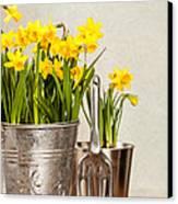 Buckets Of Daffodils Canvas Print by Amanda Elwell