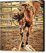 Bucking Canvas Print by Caitlyn  Grasso