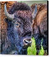 Buffalo Warrior Canvas Print by Skye Ryan-Evans