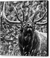 Bull Elk Bugling Black And White Canvas Print