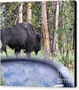 Bull Canvas Print by Jeff Pickett