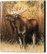 Bull Moose Canvas Print by Karen Cade