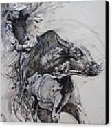 Bull Rider Canvas Print by Bob Graham