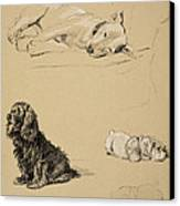 Bull-terrier, Spaniel And Sealyhams Canvas Print by Cecil Charles Windsor Aldin