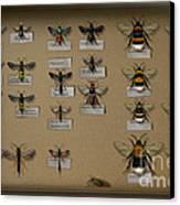 Bumblebees - Wild Bees - Wesps - Yellow Jackets - Ichneumon Flies - Apiformes Vespulas Hymenopteras  Canvas Print