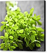 Bunch Of Fresh Oregano Canvas Print