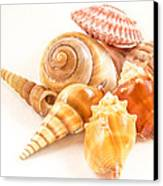 Bunch Of Shells Canvas Print by Jean Noren