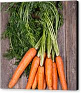 Bunched Carrots Canvas Print by Jane Rix