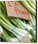Bunches Of Onions Canvas Print