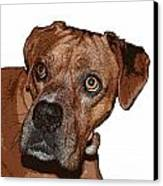Buster Brown The Boxer Canvas Print by Sandra Clark
