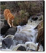 But Mom I Might Get My Feet Wet Canvas Print by Sandra Updyke