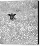 Buttercup In Black-and-white Canvas Print by JD Grimes
