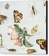 Butterflies Moths And Other Insects With A Sprig Of Apple Blossom Canvas Print
