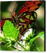 Butterfly Art Canvas Print