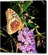 Butterfly Banquet 2 Canvas Print by Will Borden