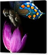 Butterfly-gorilla Canvas Print by Soumya Bouchachi