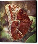 Butterfly In My Garden Canvas Print