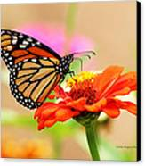 Butterfly Lunch Canvas Print by Lorna Rogers Photography