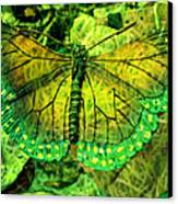 Butterfly Mimetism Canvas Print by Jo Ann