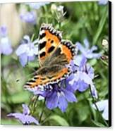 Butterfly On Blue Flower Canvas Print