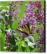 Butterfly On Lilac Canvas Print by Diane Mitchell