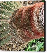 Cactus Canvas Print by Sharon McLain
