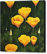 California Poppy Canvas Print by Veikko Suikkanen